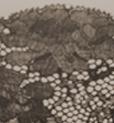 Imprimé dentelle brun foncé